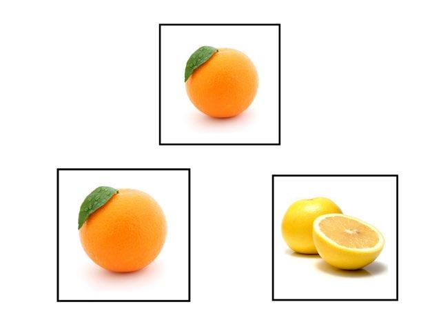 לוטו פירות הדר by ilana voronin
