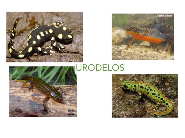 Urodelos by Curso CFTIC