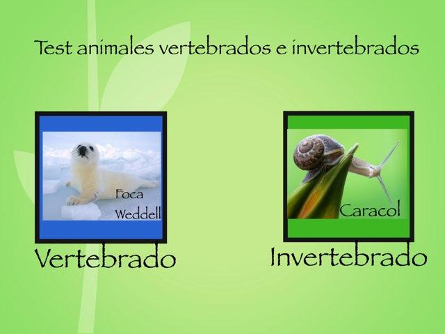 Vertebrados/ Invertebrados by Frida ibarra