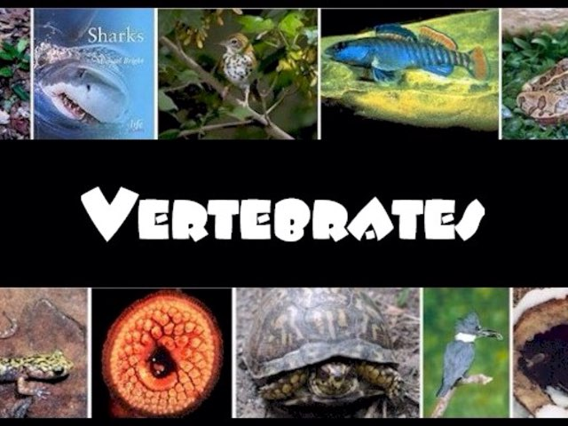 Vertebrate Classification by Jennifer Alexander