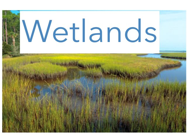 Wetland N.C by Sarah Bosch