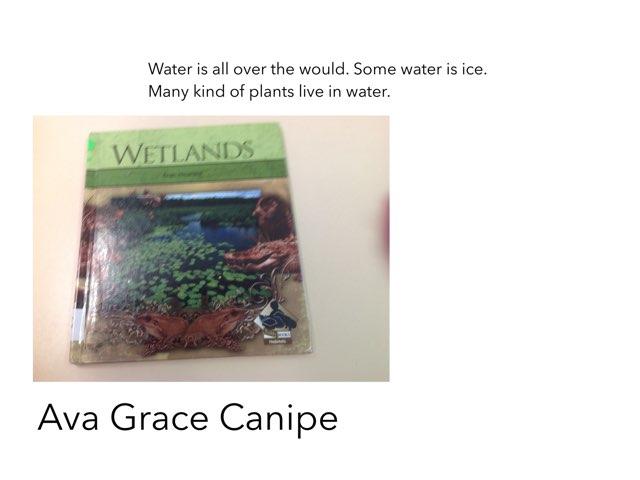 Wetlands  by Christine Snow
