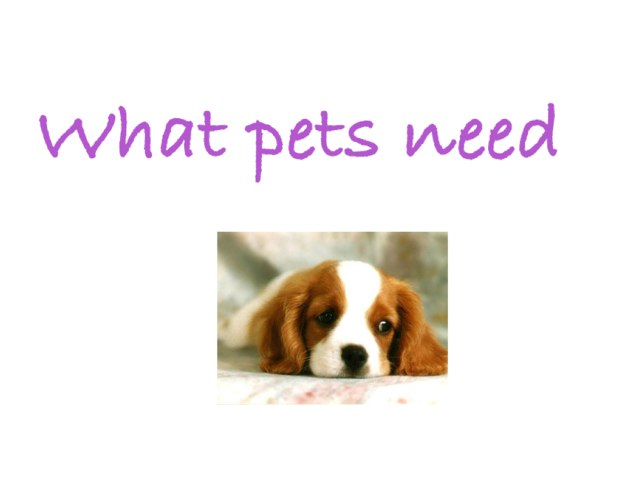 What Pets Need by Jen Siddons