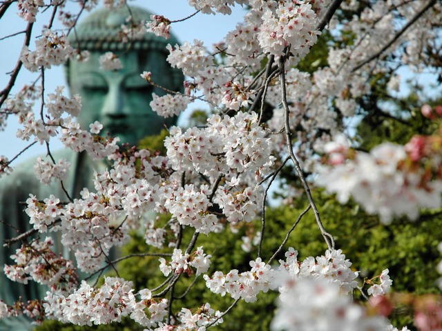 Where Is The Buddha Head by Andy James