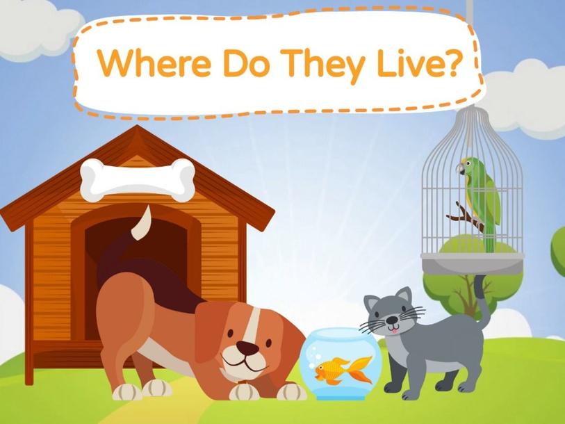 Where Do They Live? by Mónica Denis