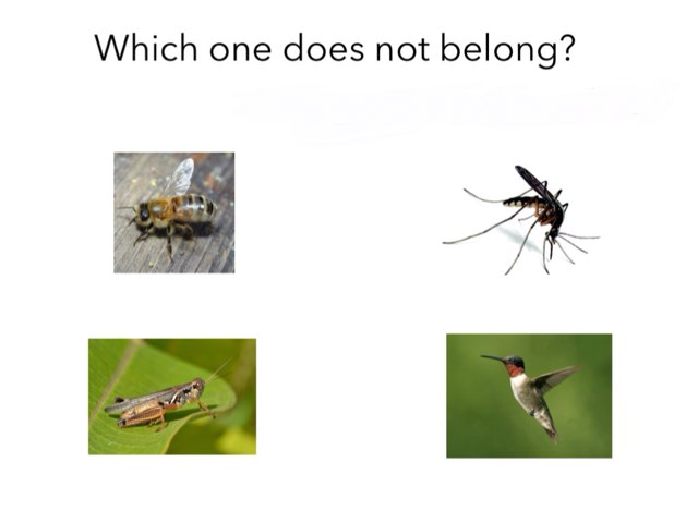 Which One Does Not Belong by DeVere Bunke