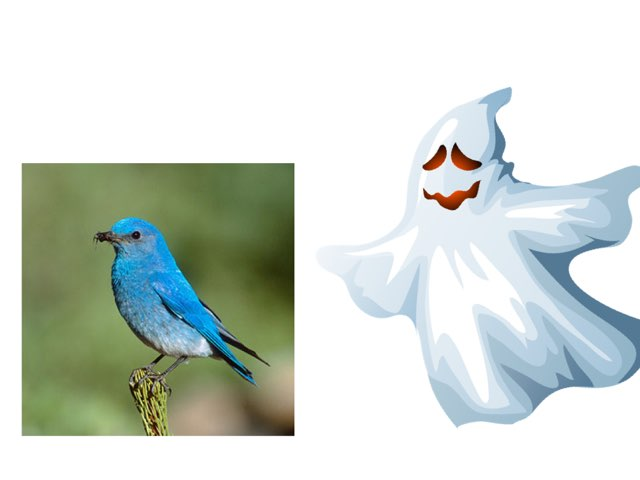 Who's There Halloween by Susan roberts