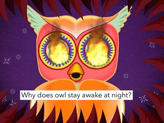 Why Does Owl Stay Awake At Night? by Katrina Fabbri