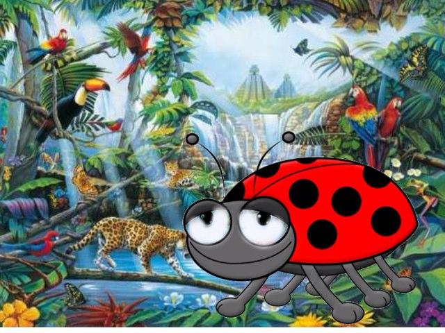 Why Ladybug Is So Small by Katrina Fabbri