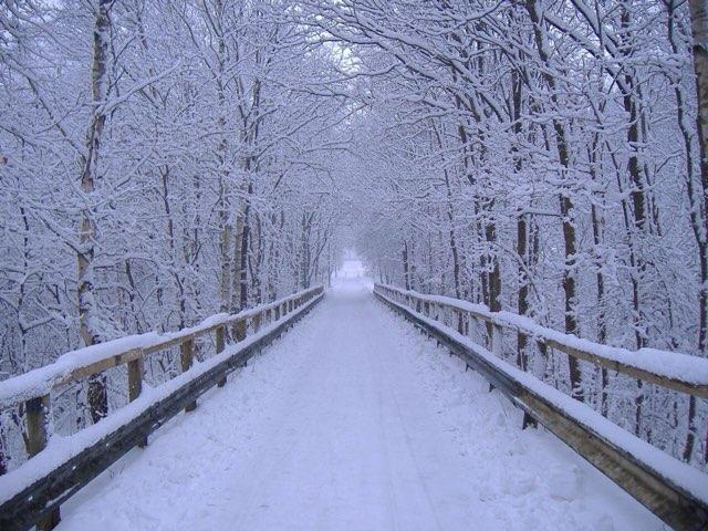 Winter by Natalie Kutscher