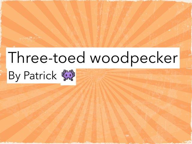 Woodpecker by Amy Clay