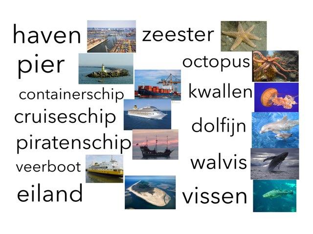 Zee by Miranda Dijkstra