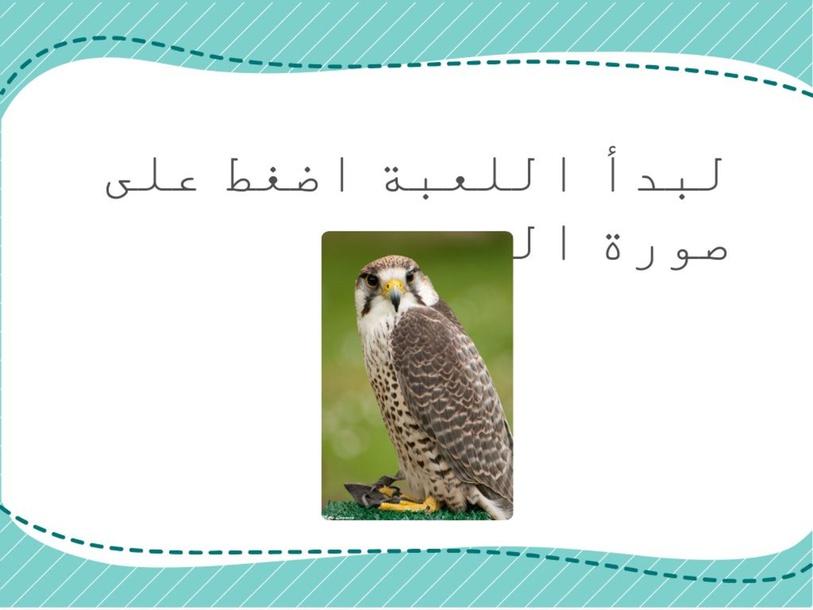 الصقر by maha alshammari