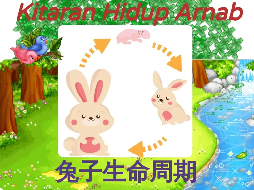 兔子 by Shuk Chiun Liew