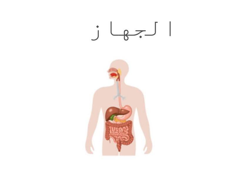 الجهاز الهضمي by Dan goolr