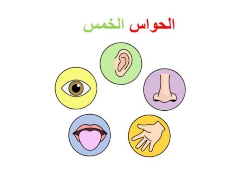 الحواس الخمس by ssh