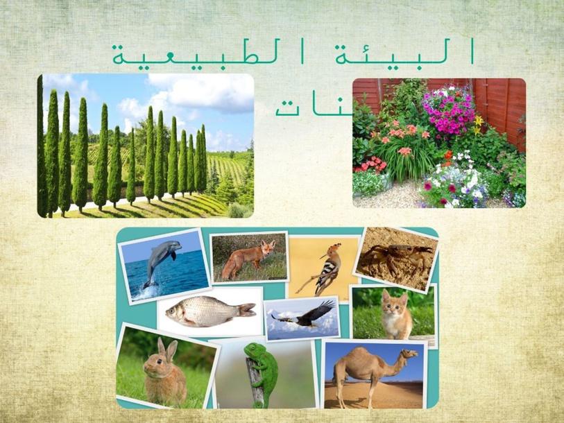 البيئة الطبيعية by Samira Elbedour
