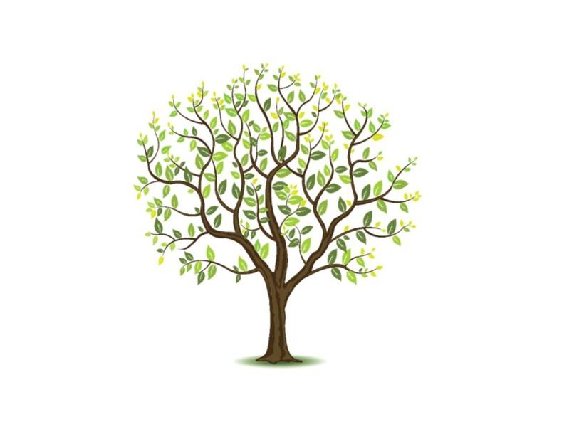חלקי העץ by Adi Hamami