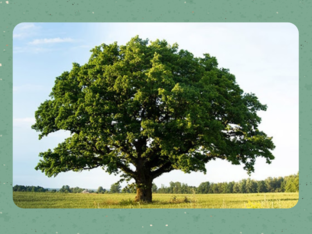 סוגי עצים by Sapir Peled