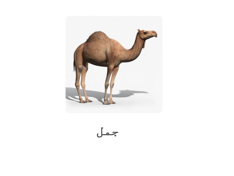 حرف ج by om alsabaa oman
