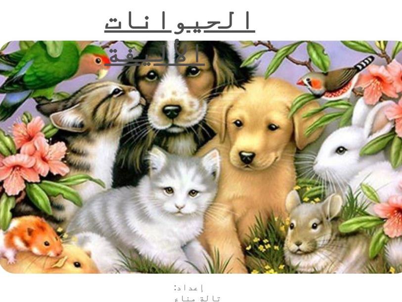 الحيوانات الداجنة by Tala Manna'a