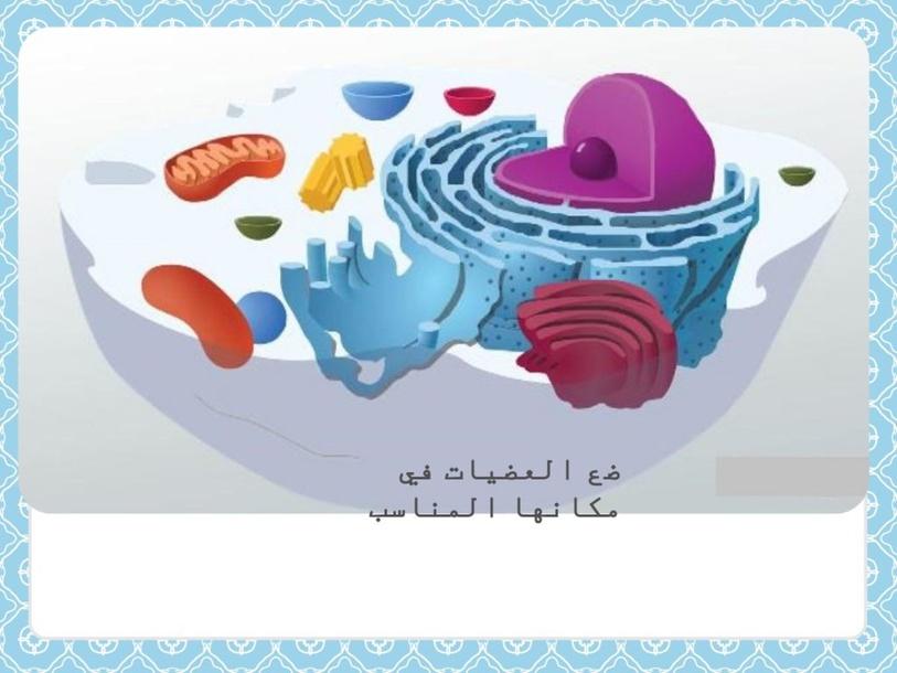 عضيات الخلية by Amal Sul