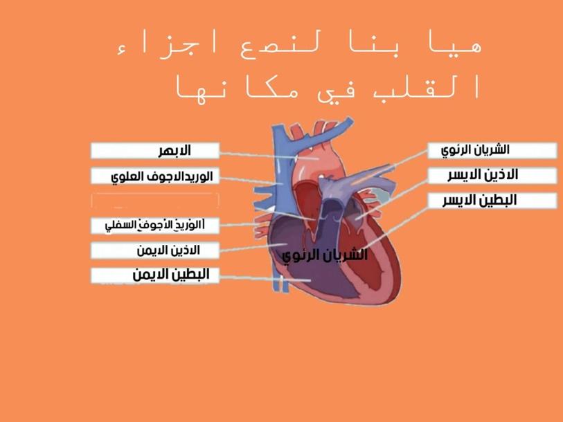 تركيب القلب by Rasha Abu Aisha