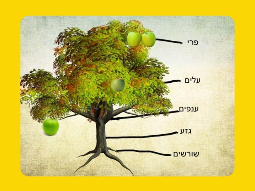 חלקי העץ by Sapir Peled
