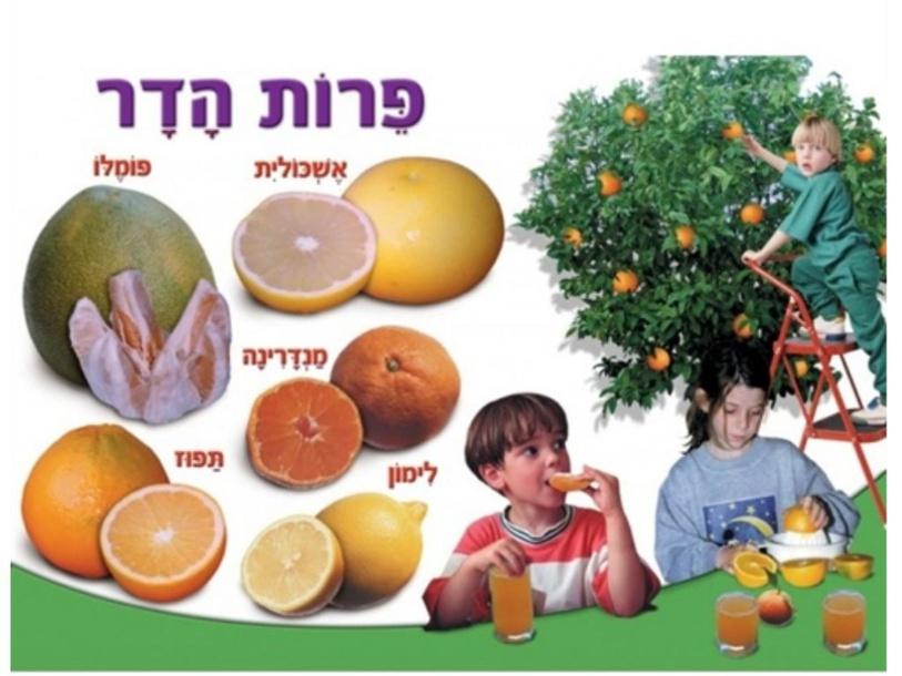 פרות הדר by Sapir Peled