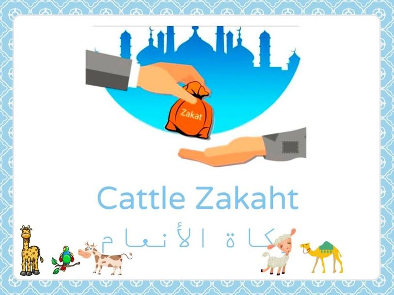 زكاة الأنعام Cattle zakaht  by Layla Al Qadi
