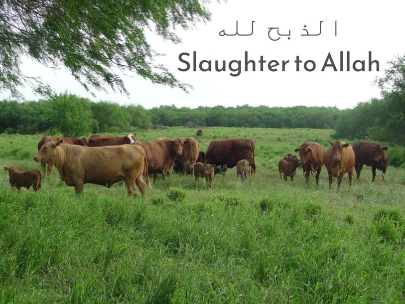 الذبح لله Slaughter to Allah   by Layla Al Qadi