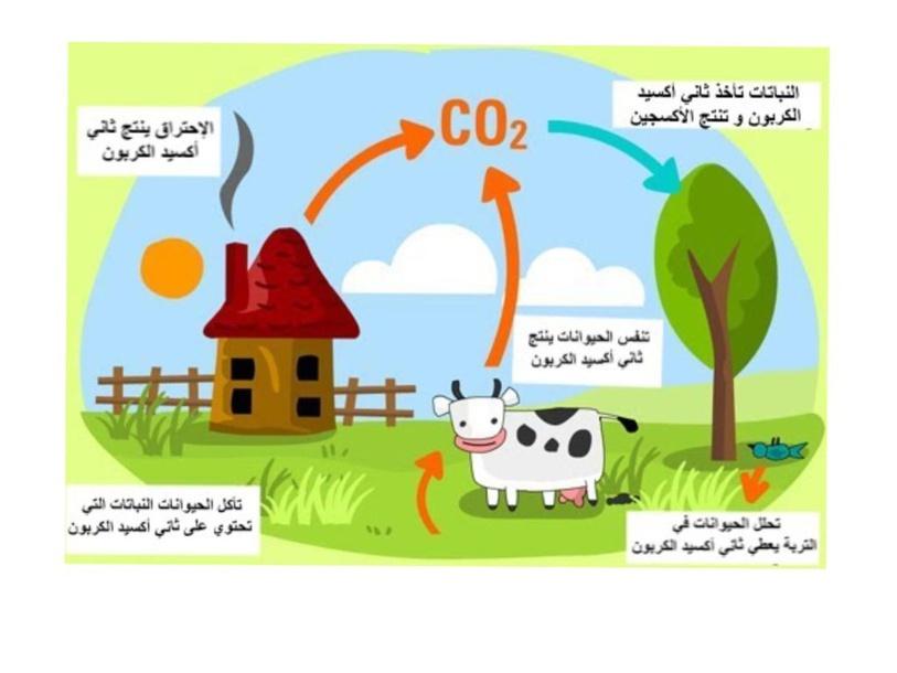 دورة الكربون  by Majda Altamimi