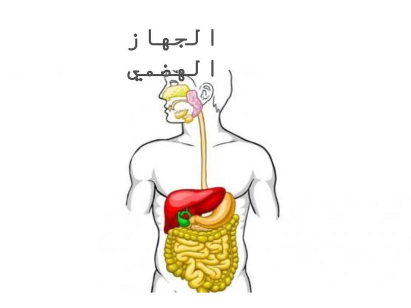 الجهاز الهضمي  by nahida khaleel