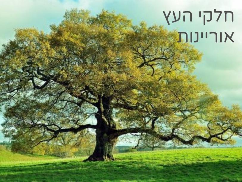 חלקי העץ אוריינות by אביטל רוב