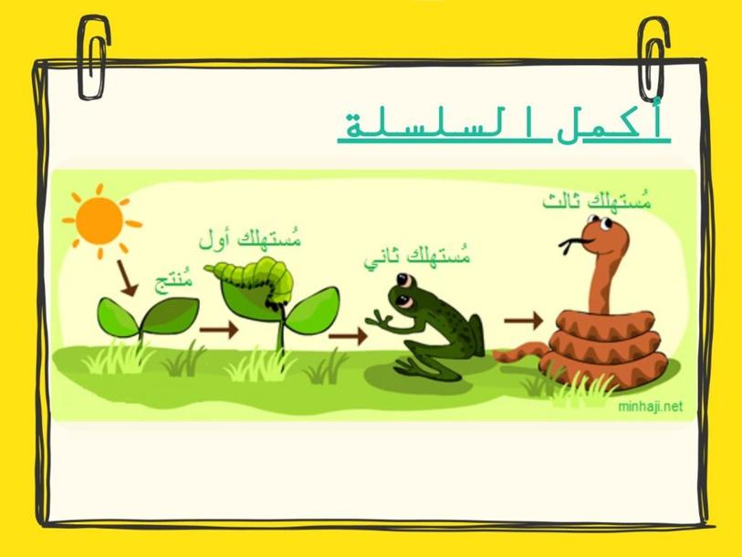 السلسلة الغذائية  by Safa 'Sfaxi'