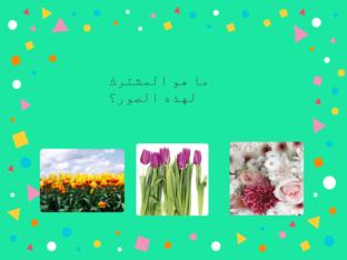 المشترك بين الصور by عاىشه