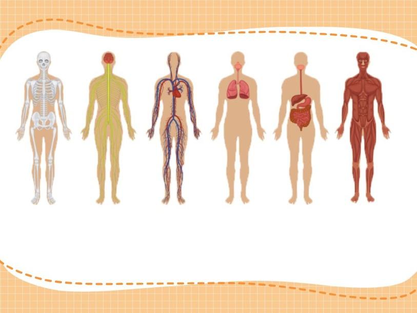 أجهزة الجسم  by atef elkady