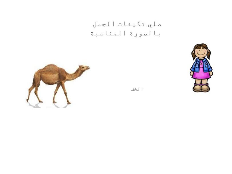 تكيف الجمل في الصحراء by mn rh
