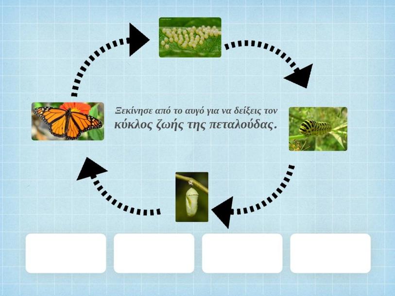 Ο κύκλος ζωής της πεταλούδας by charalambouselen