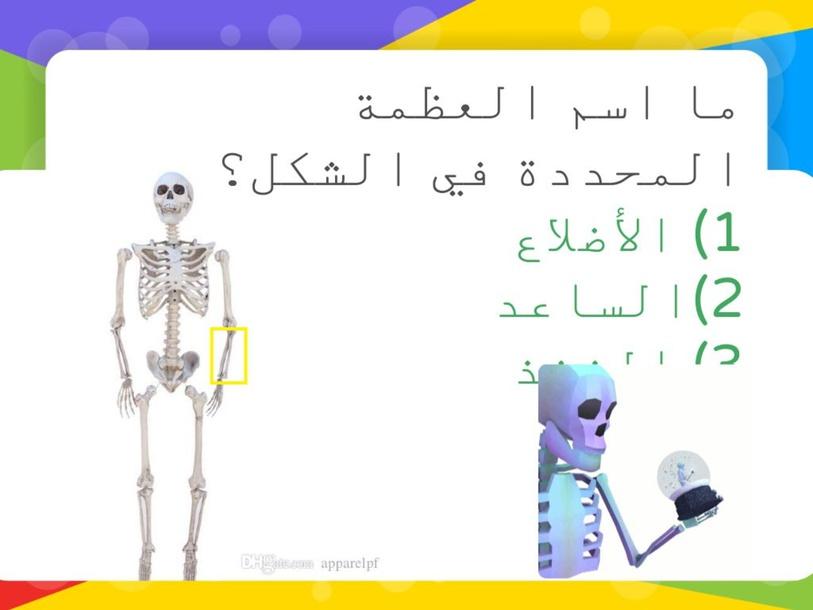الجهاز الهيكلي والجهاز العضلي by sara khalel