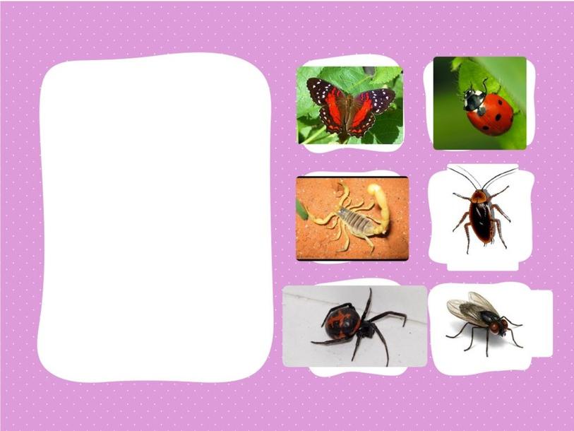 ملائمة اجزاء الحشرات  by פאיזה אלטורי