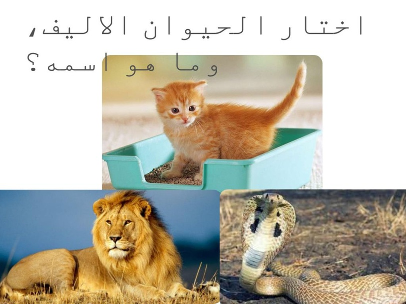اسد، افعى، قطة  by Dunia Duniaqaq