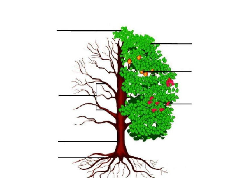 מבנה חלקי העץ by נופר לוי