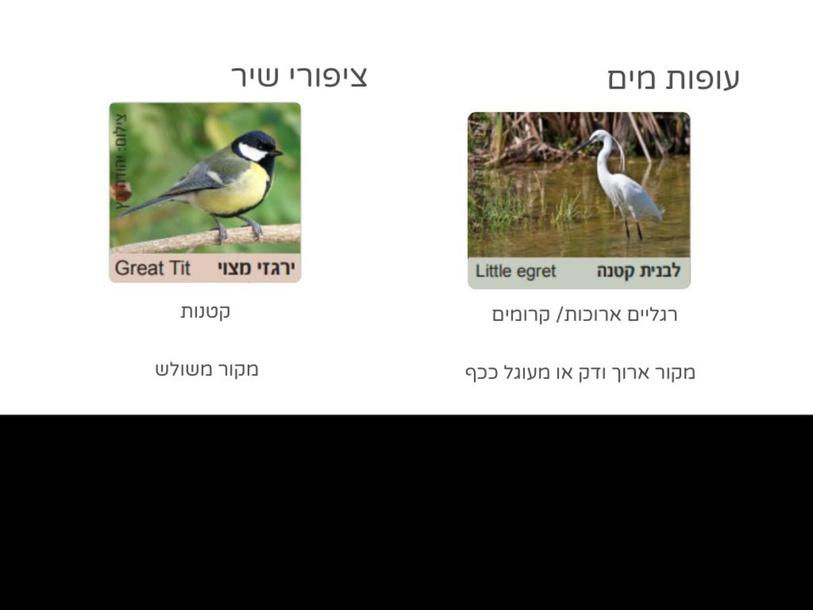 ציפורים בקרבת הנחל by Tal Regev