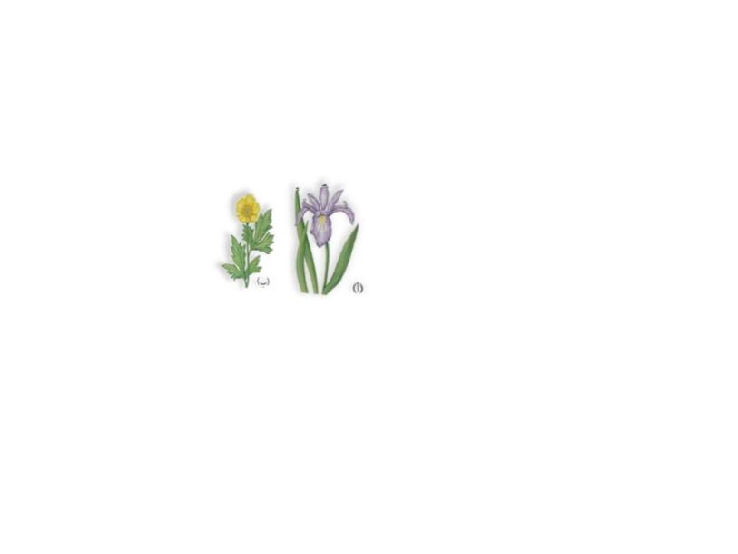لعبة عن النباتات by rudaina qasim
