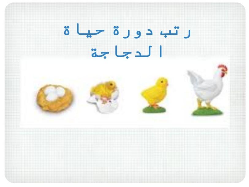 دورة حياة الدجاجة by منيرة  فهد