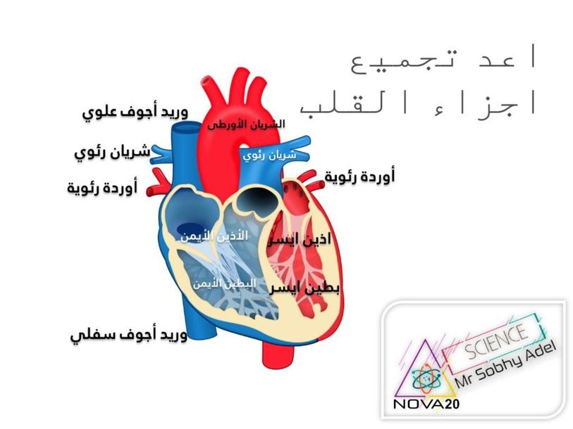 تركيب القلب by Mr-Sobhy Adel
