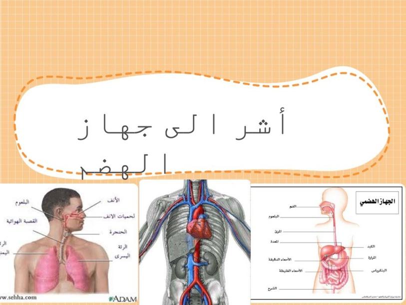 أجهزة الجسم by סוהא פרח