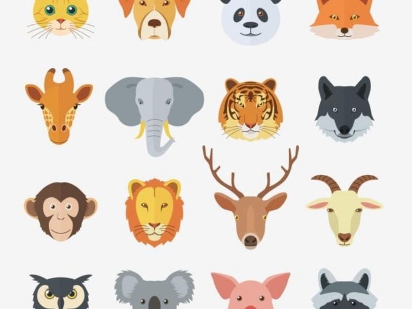 مجموعة الحيوانات by תהאני דוח'אן