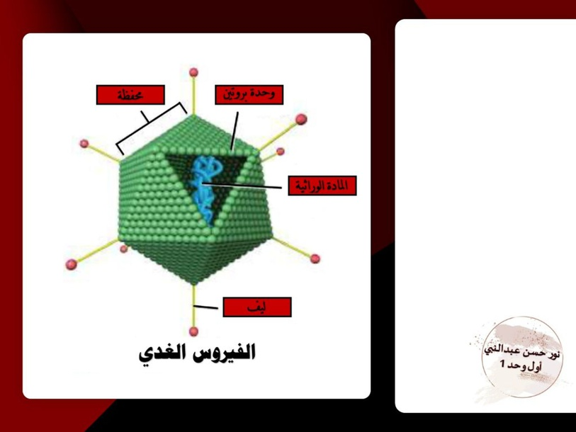 الفيروسات - viruses by Noor Aljirdabi